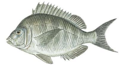 fish_LND_NEW_SLOs